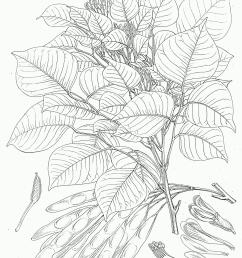 how tree grow diagram [ 1188 x 1722 Pixel ]