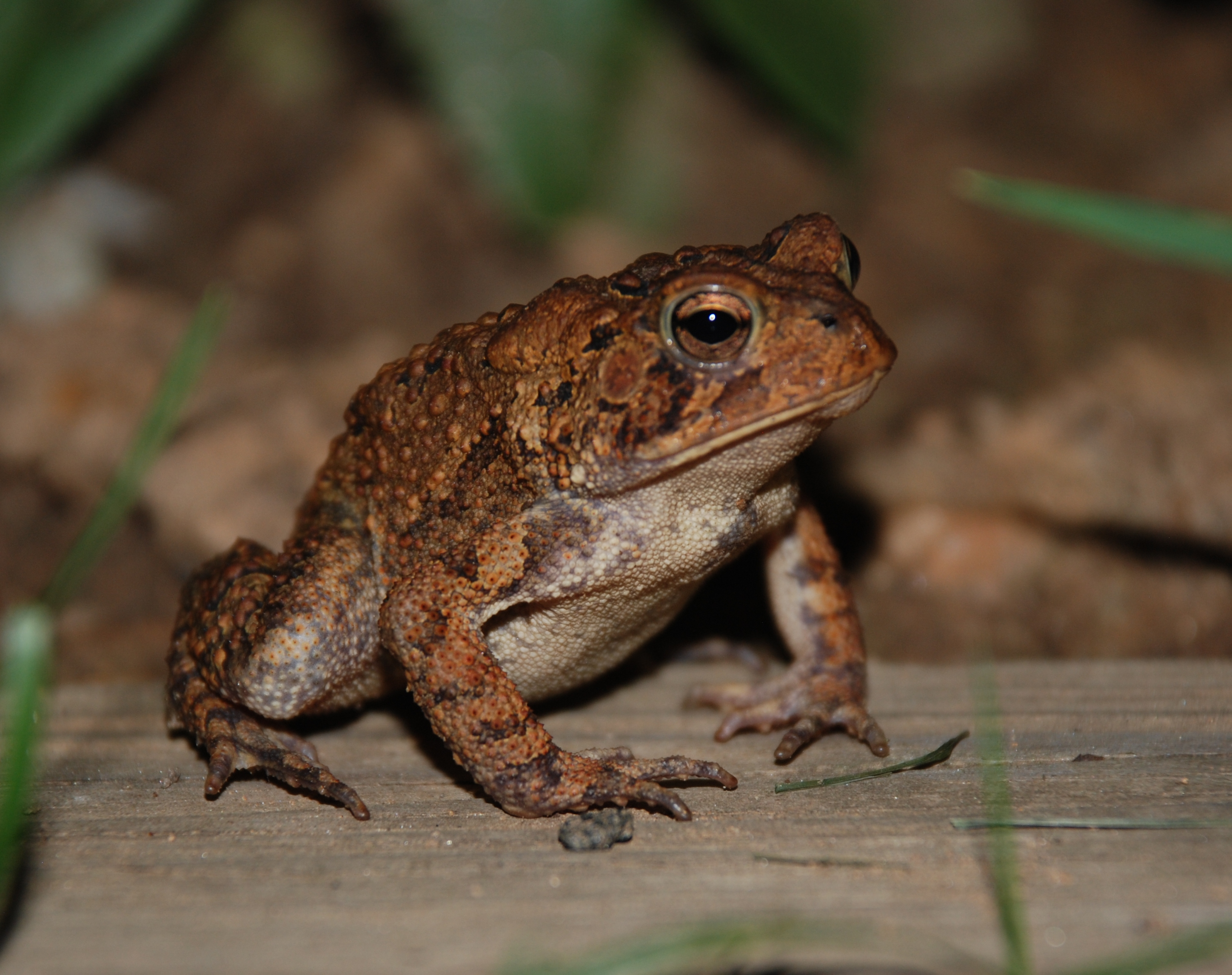 What Are The Differences Between The Call Of One Male Frog