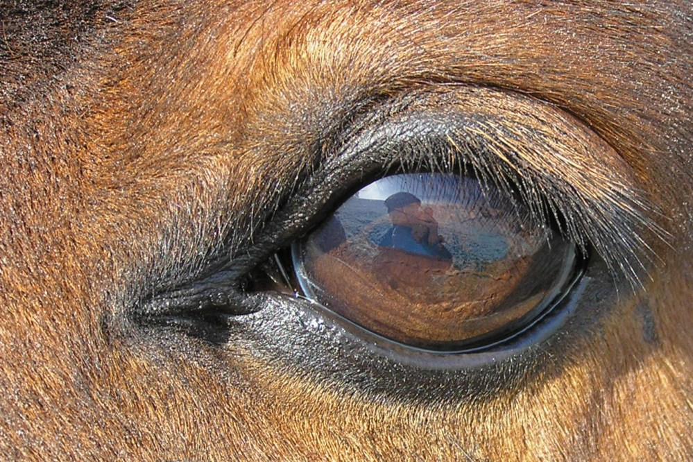 medium resolution of eye diagram rod and cone of a dog  with