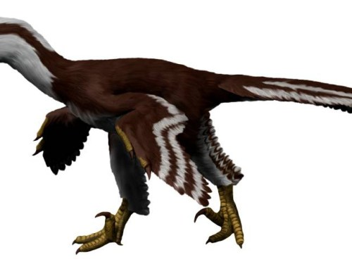 https://i0.wp.com/upload.wikimedia.org/wikipedia/commons/e/ec/Acheroraptor_NT_small.jpg?resize=500%2C375&ssl=1