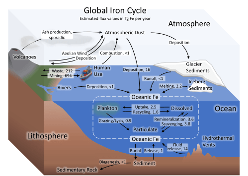small resolution of diagram of the carbon and nitrogen cycle