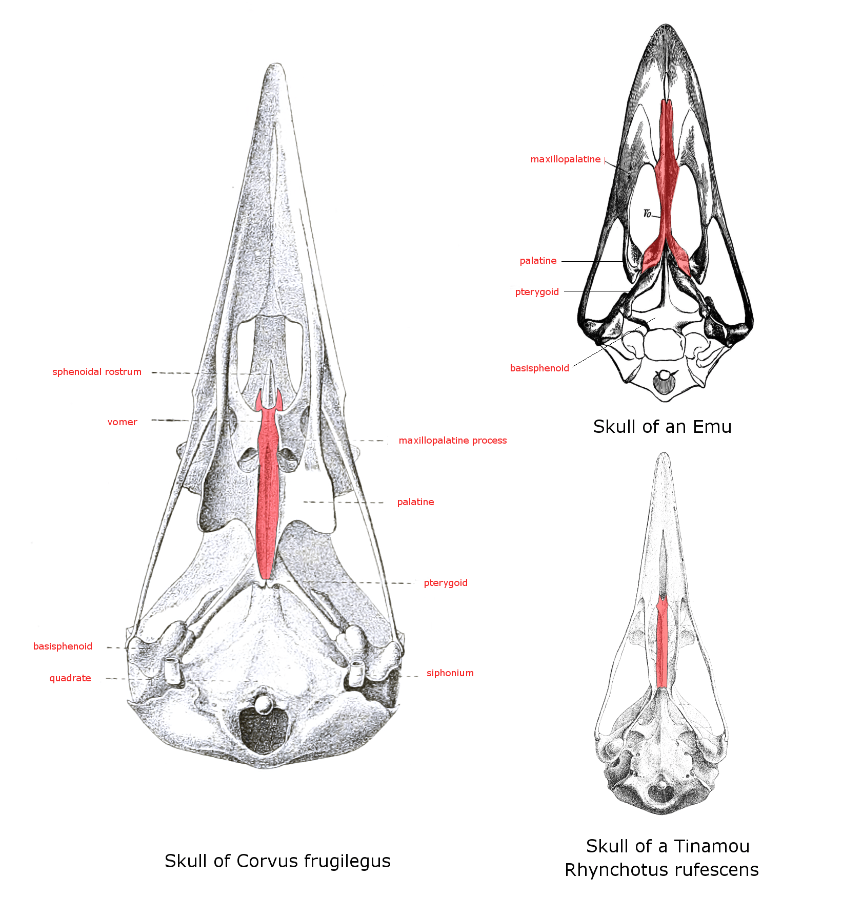 Face Mouth Anatomy Diagram