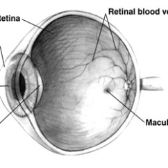 Human Eye Diagram Simple Sub Panel Separate Ground Retina Wikipedia
