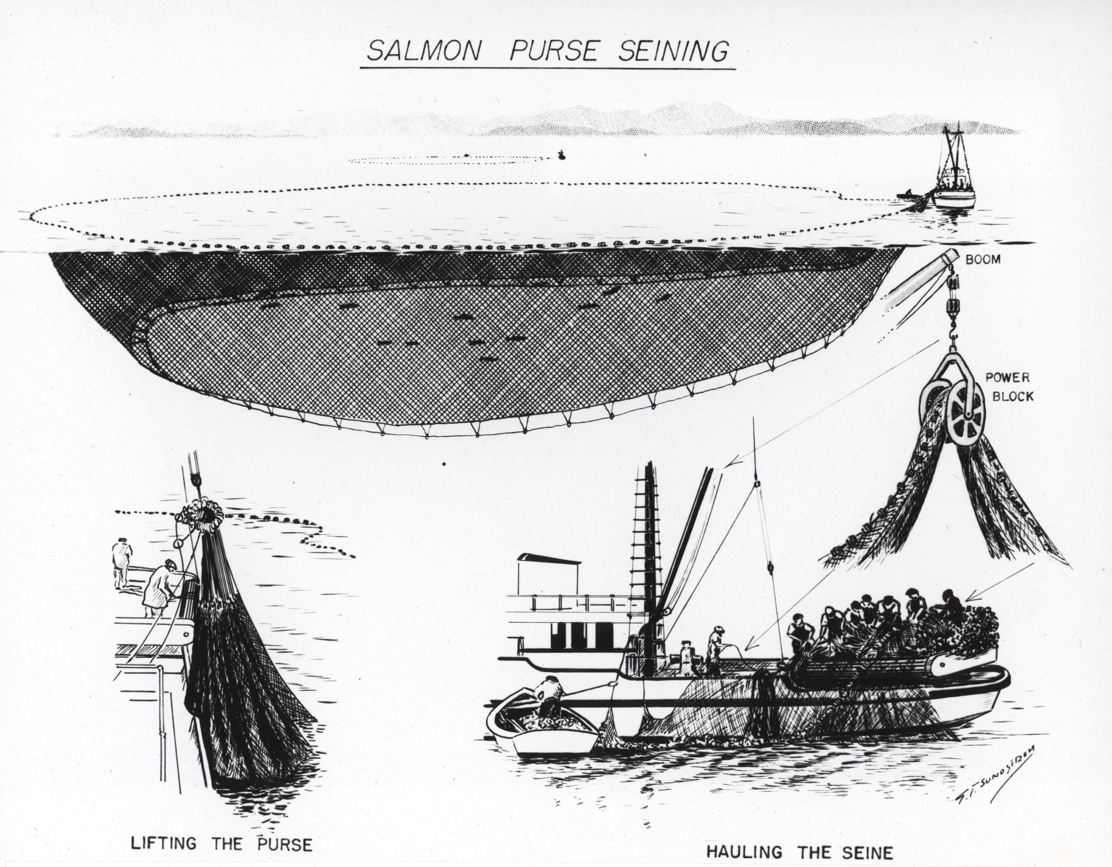 File Diagram Of Salmon Purse Seining