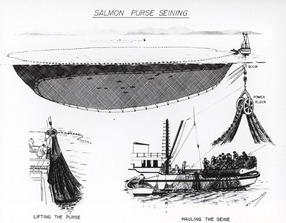 medium resolution of file diagram of salmon purse seining jpg