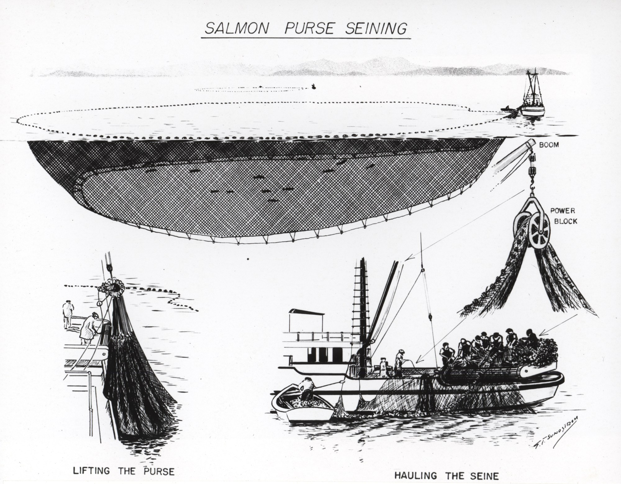 hight resolution of file diagram of salmon purse seining jpg