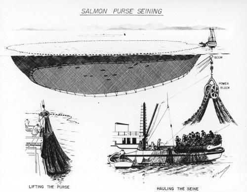 small resolution of file diagram of salmon purse seining jpg