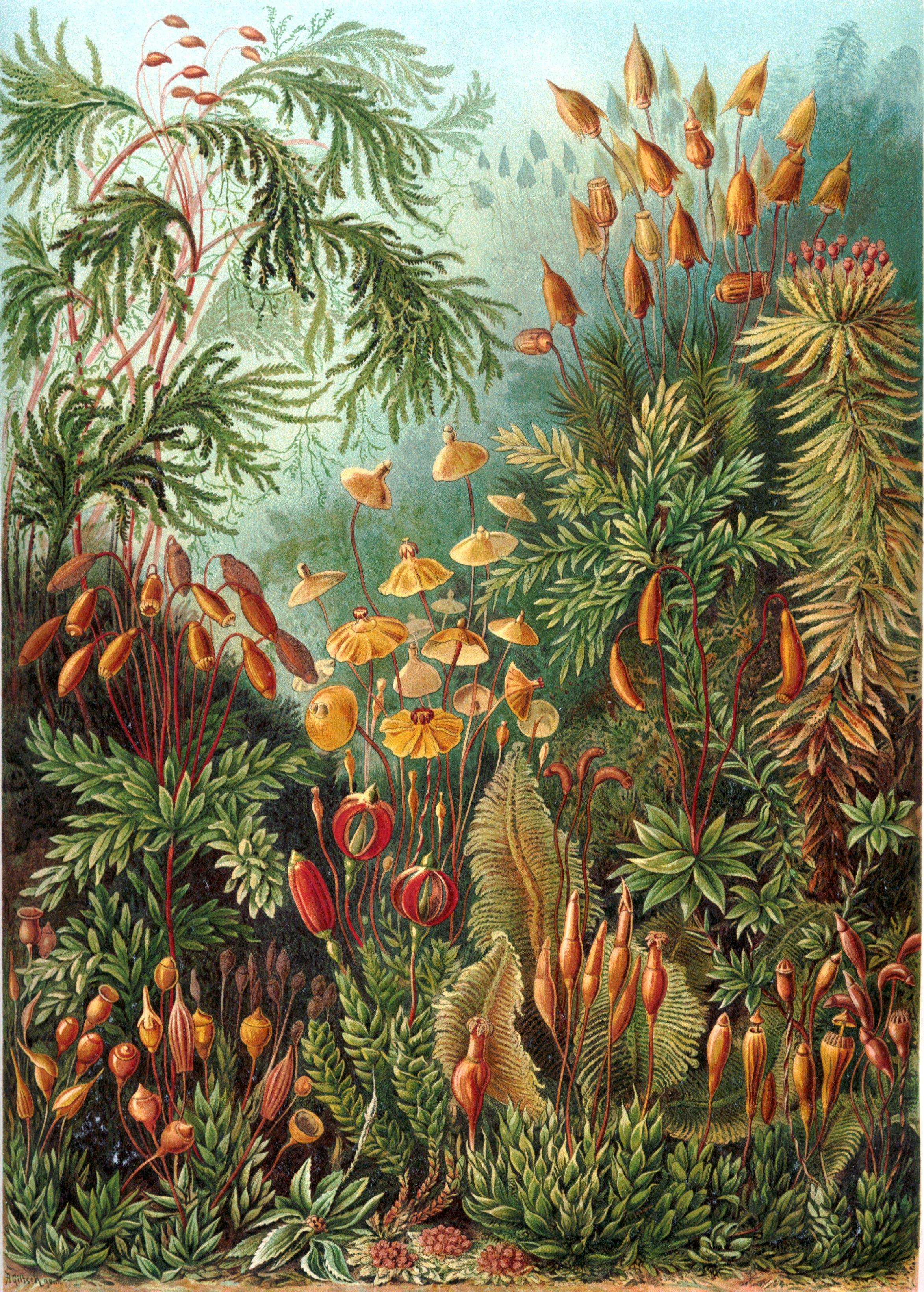 Moss diversity