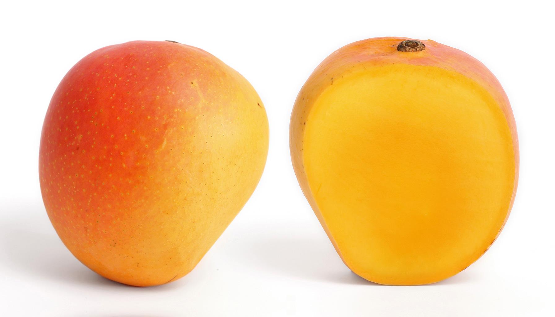 Mangifera indica  Wikipedia