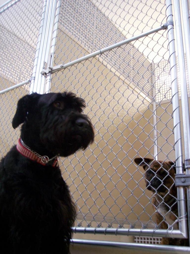 Kennel  Wikipedia