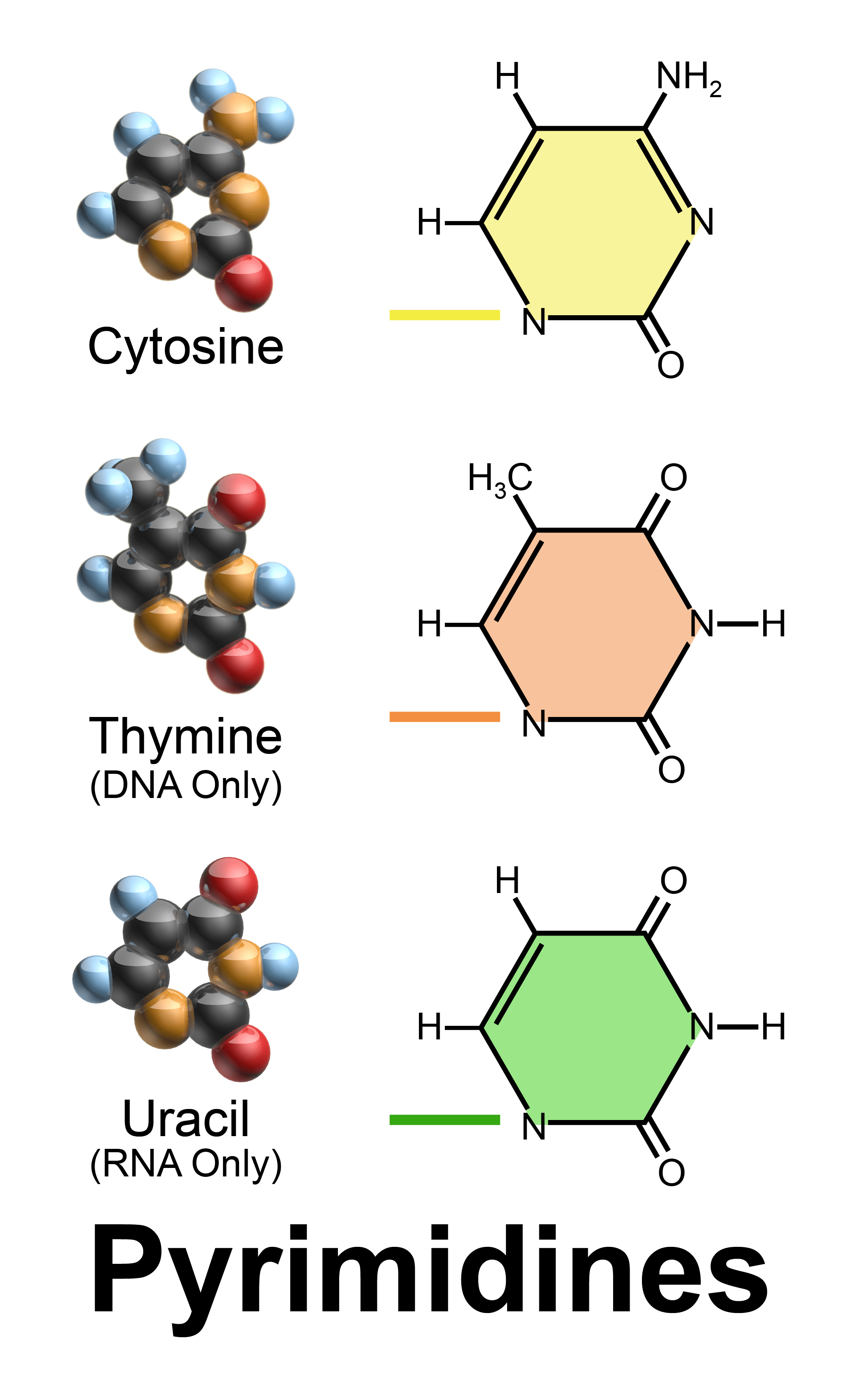 hight resolution of nucleobase
