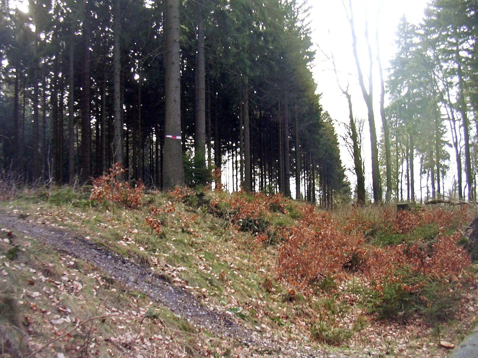 Limes near Großer Feldberg, Taunus/Germany