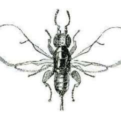 Hornet Anatomy Diagram 90cc Quad Bike Wiring Fig Wasp Wikipedia
