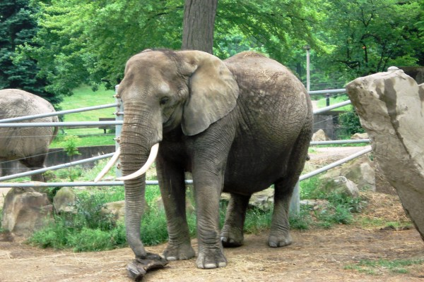 Cleveland Metroparks Zoo Wiki Everipedia