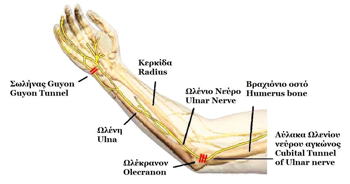 ulnar nerve diagram single line of distribution system entrapment wikipedia