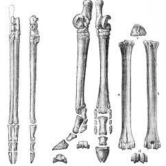 Deer Skeleton Diagram Soldering Neutrik Camel Head Get Free Image About Wiring