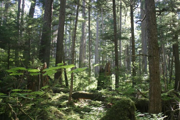 As you explore southeast alaska, you can see remnants of the vast glaciers that formed much of the north american landscape. Forests Of The United States Wikipedia