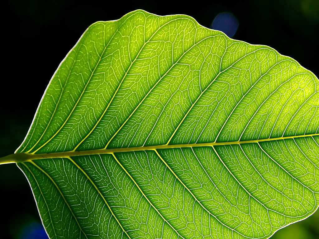 Leaf 1 web.jpg