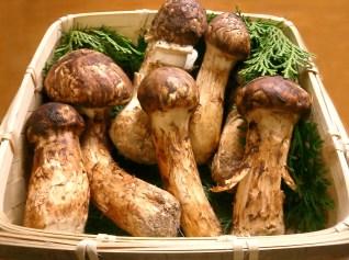 Matsutake Mushrooms - Wikipedia