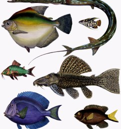 ray fish diagram label [ 2586 x 2980 Pixel ]