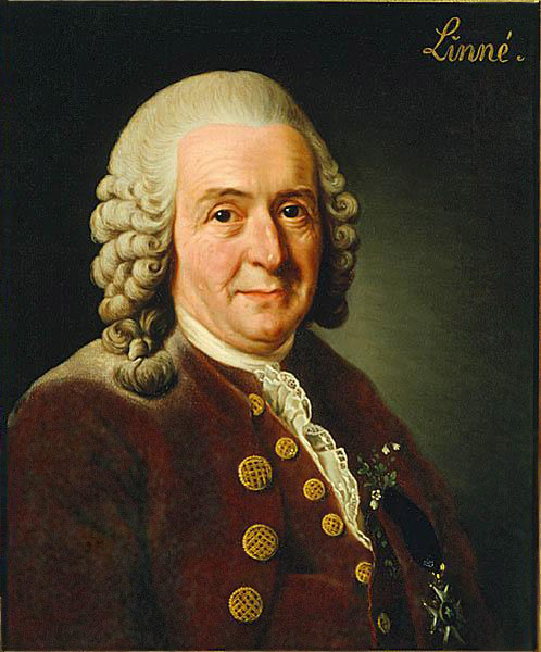 Carl von Linné. Bild: Wikimedia Commons