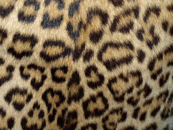 Surfaces Fur & Hair Texture And
