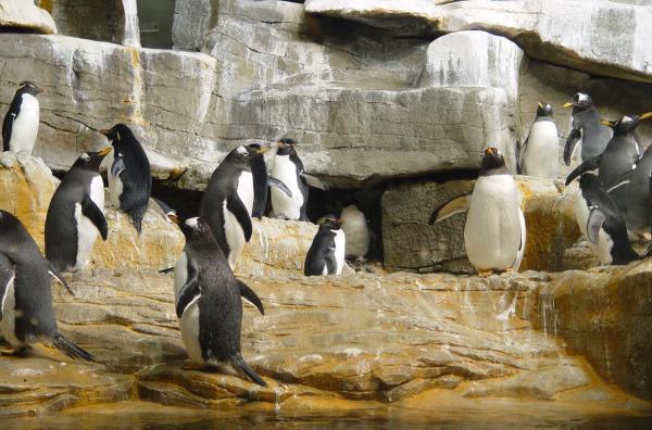 File Chicago - Shedd Aquarium 2379489501 Wikimedia
