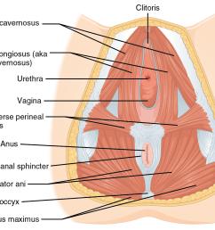 urethra diagram [ 1340 x 1102 Pixel ]