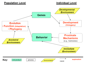 File:New behavioral diagrampng  Wikimedia Commons