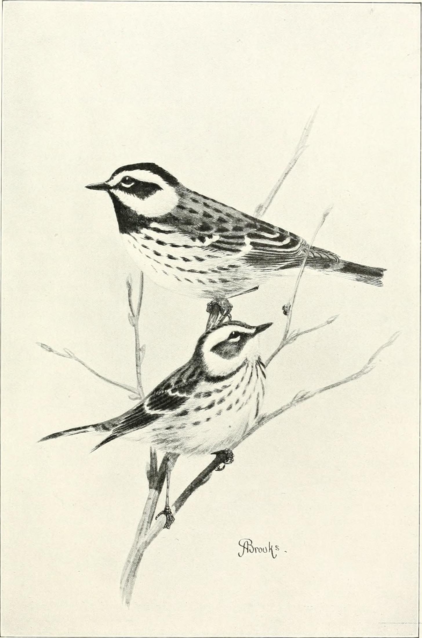 File The Birds Of Washington