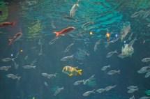 Silverton Casino Las Vegas Aquarium