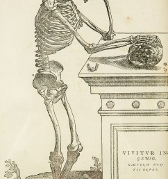 ave skeleton diagram [ 2557 x 4554 Pixel ]