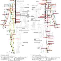 Martial Arts Diagram 2002 Evinrude 90 Ficht Wiring Pressure Point Wikipedia