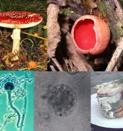 fungi cell [ 1220 x 1062 Pixel ]