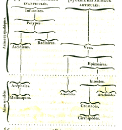 file lamarck 1815 diagram of animal evolution png [ 1167 x 1718 Pixel ]