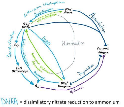 small resolution of file nitrogen cycle of hydrothermal vents 2 png