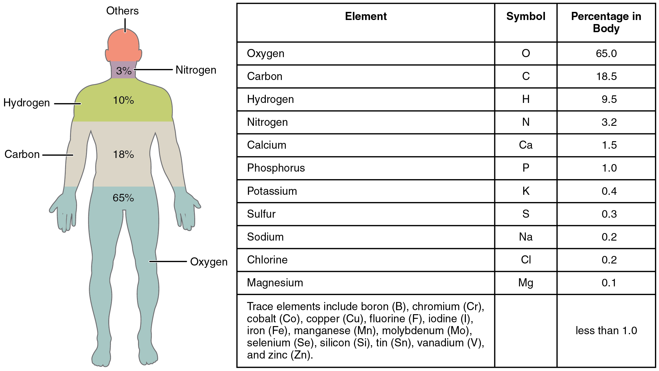 Opinions On List Of Human Blood Components