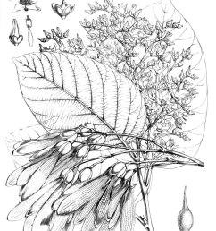 how tree grow diagram [ 999 x 1376 Pixel ]