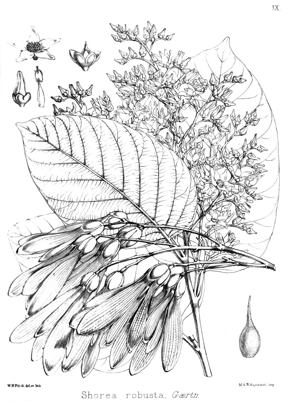 medium resolution of how tree grow diagram