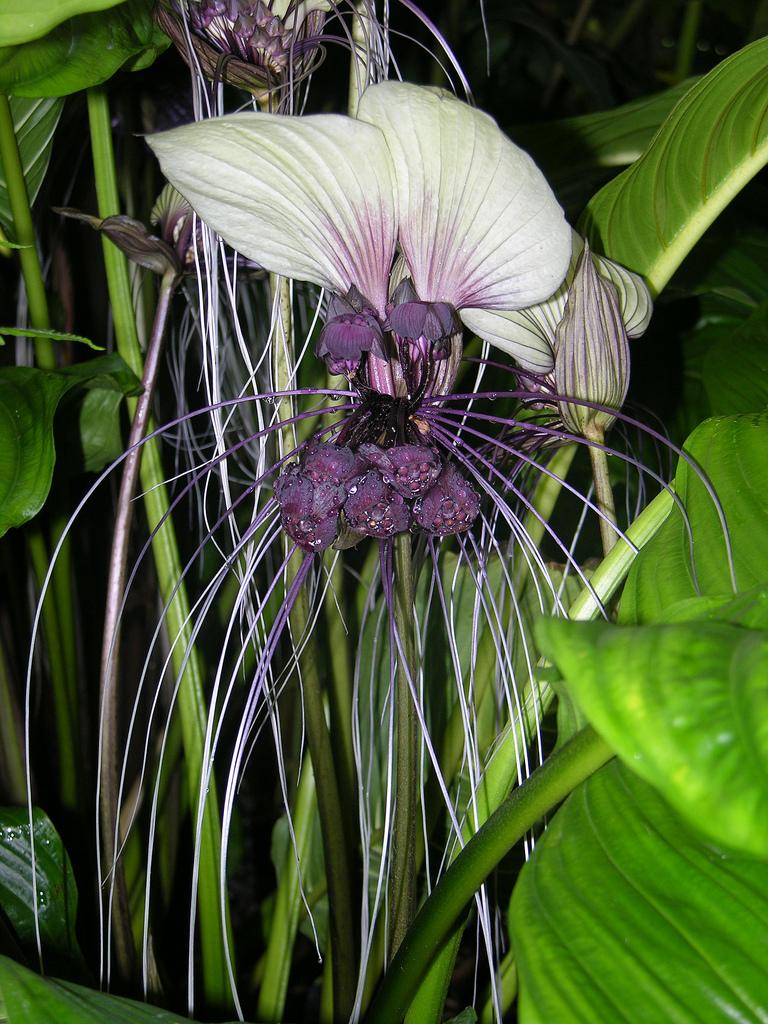 Flower And Vegetable Garden Ideas