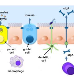 intestinal mucosal barrier [ 1386 x 916 Pixel ]