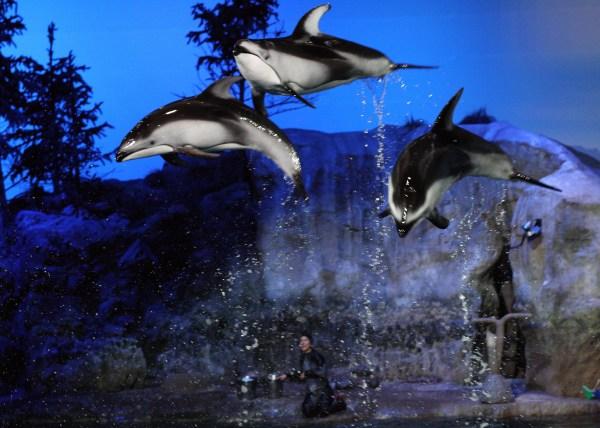 File Fantasea Aquatic Show Shedd Aquarium 36 2009-11