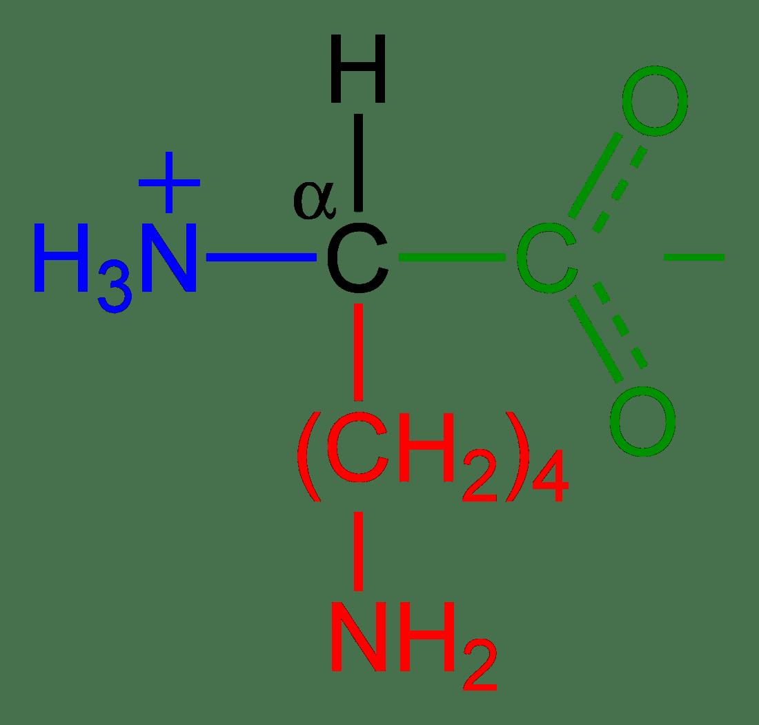 File Lysine Zwitterion 2d