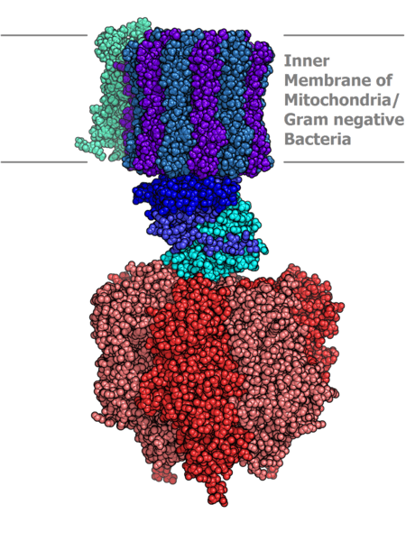 File:Atp synthase.PNG