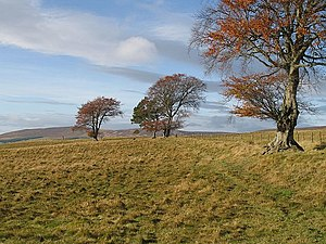 English: Field boundary Just a few scattered b...