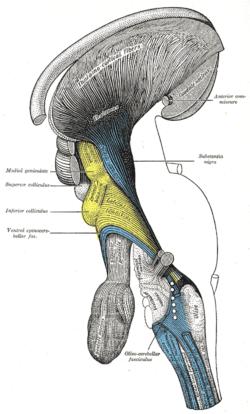 reticular formation diagram yamaha guitar wiring tectum - wikipedia