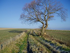 English: Lonely tree between Coombes and Lanci...