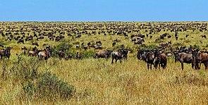 Desertification  Wikipedia