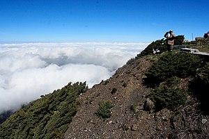 English: Juniperus morrisonicola near summit o...