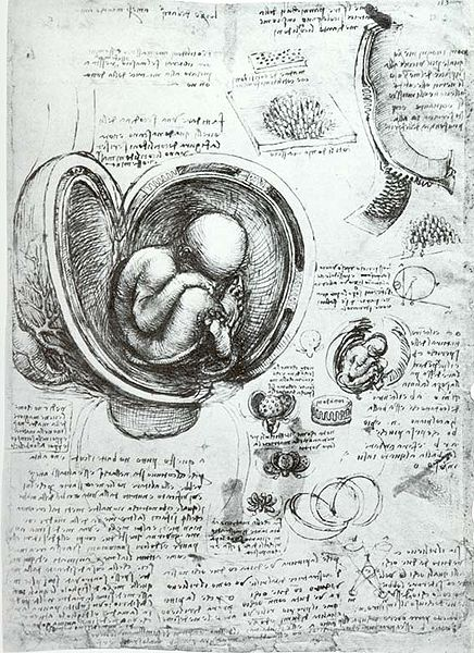 File:Leonardo da Vinci Studies of Embryos.jpg